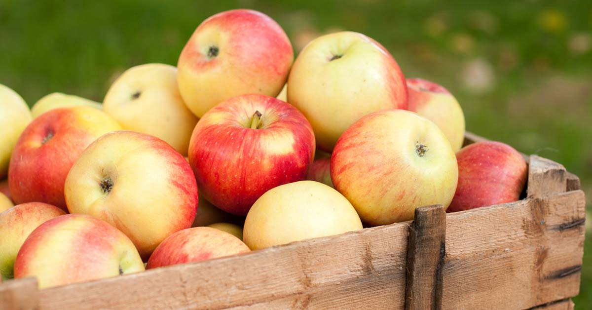 Apples how do you make the most of them